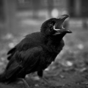 Child_Crow